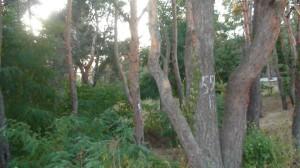ліс красивий
